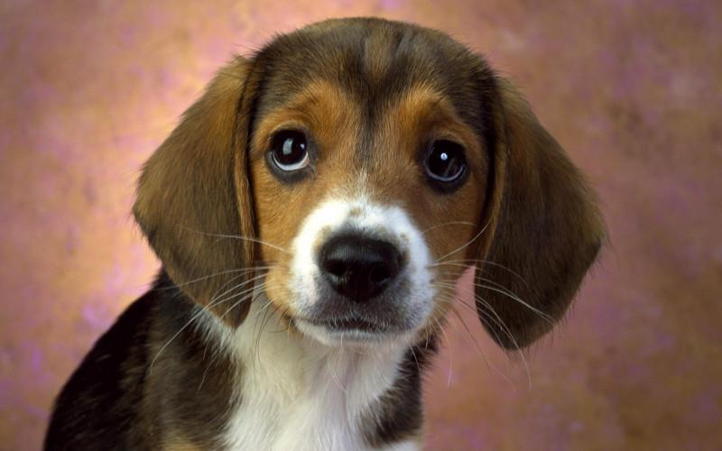 10 просьб щенка, обращенных к будущему хозяину!