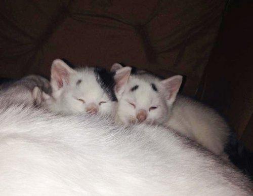Озадаченный котёнок Гэри – новая Интернет-сенсация