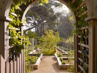 Осень на участке: Планируем деревья... в огороде (10 photos)