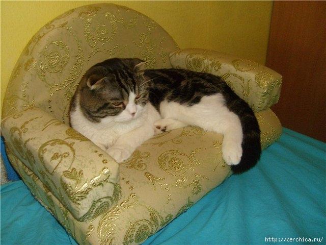 Для кошки своими руками диванчик