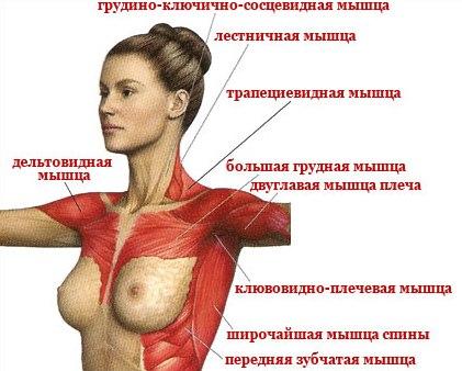 http://cosmetology-info.ru/img_lib/2014/11/1417000508_c40d.jpg