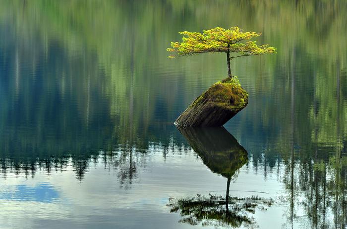 Уединение дерево, живучесть, жизнь, мир, планета, растительность, фото