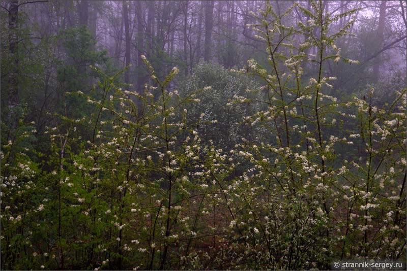 Ласковый май в волшебном лесу