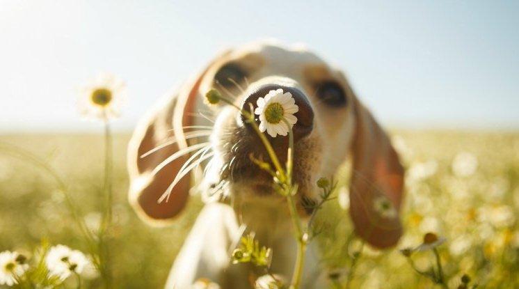 Научно подтвержденные чувства собак