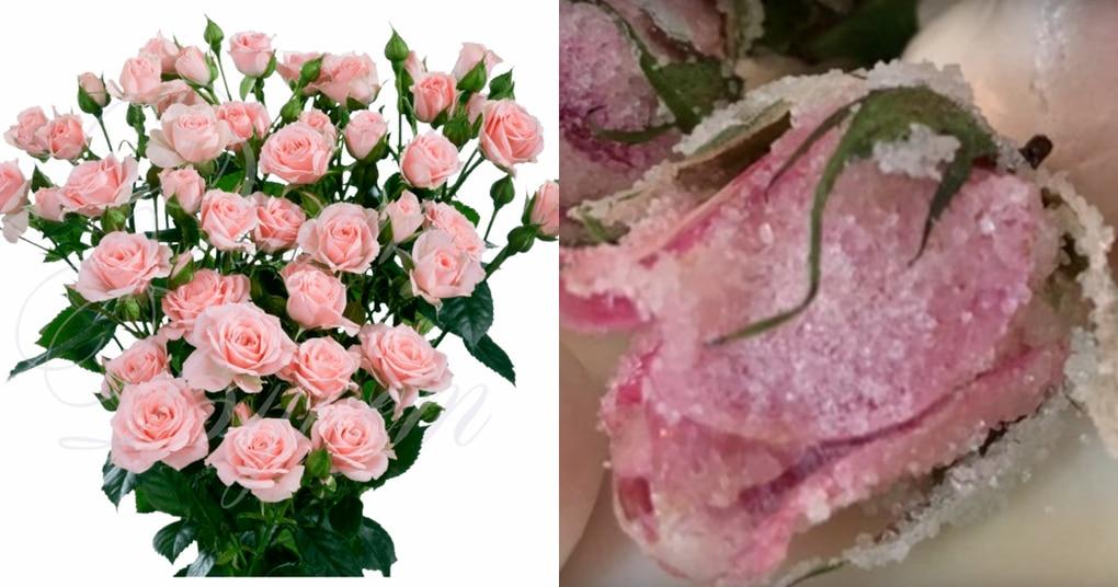 Превратите живые цветы в невероятное лакомство