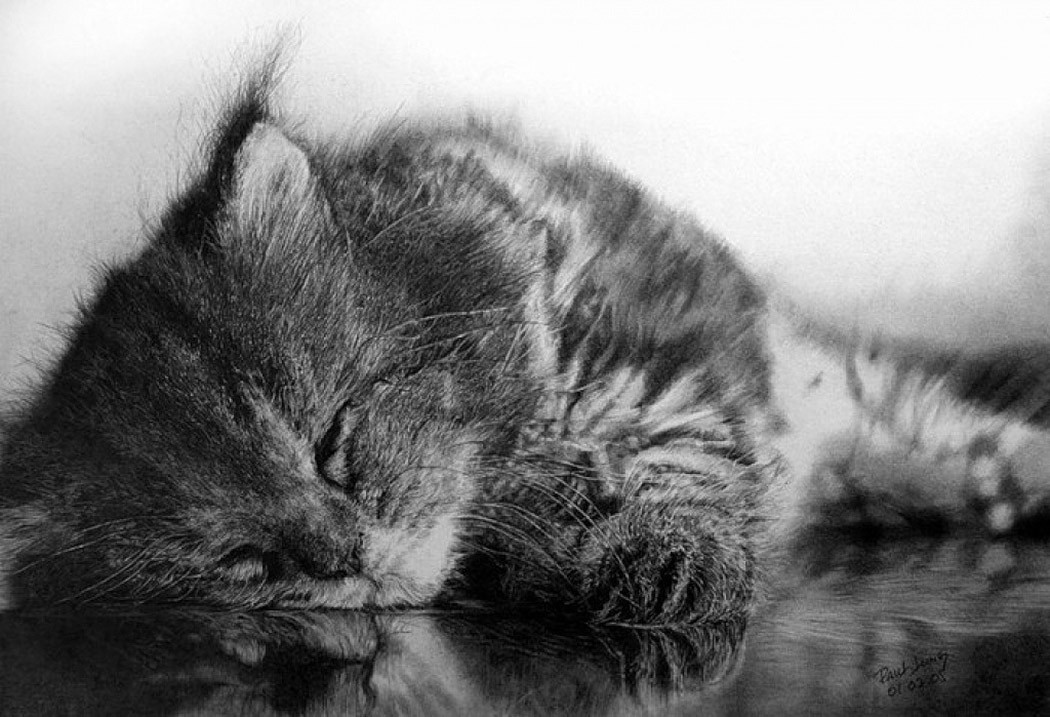 drawncats01 Мастер карандашного наброска — Пол Ланг