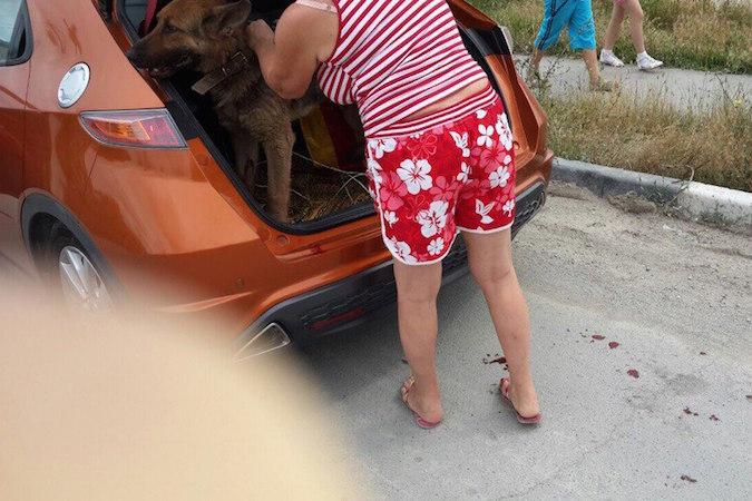 Жительница Новороссийска возила по городу привязанную к машине собаку.