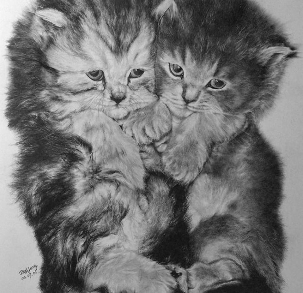 drawncats03 Мастер карандашного наброска — Пол Ланг