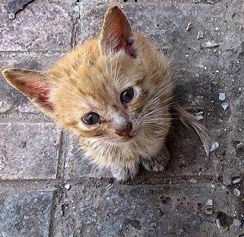 Бездомный котенок - душевное стихотворение