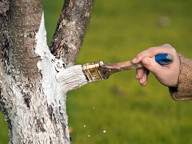 Как залечить кору дерева