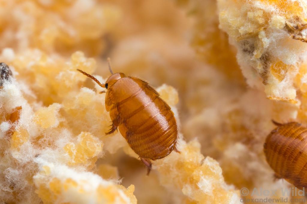 Гей натуралист муравьи