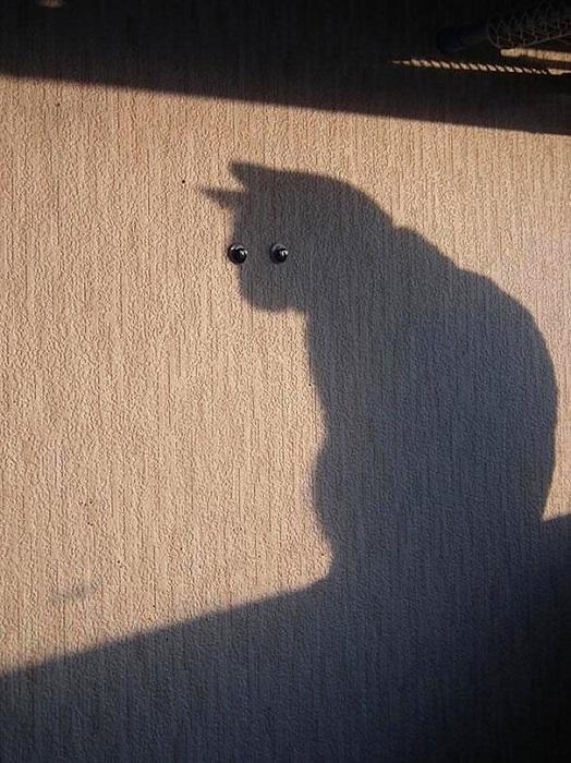 Домашнее привидение.