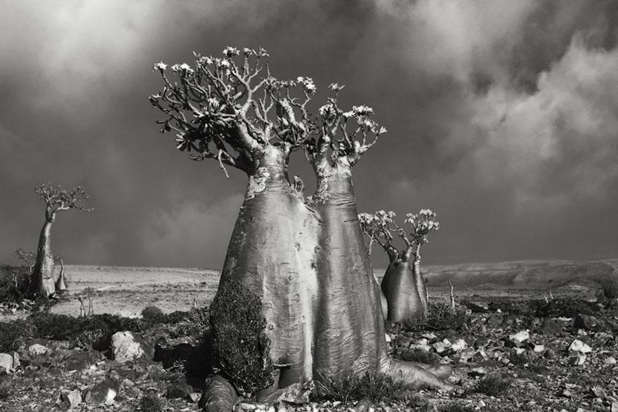Деревья древние как мир в фотографиях из 14-летнего путешествия-5