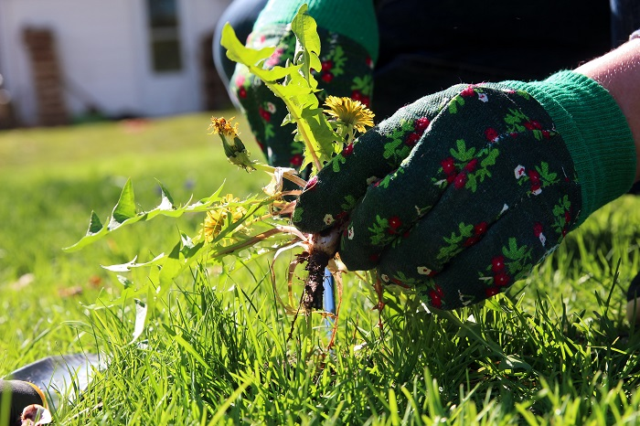 Домашнее средство для борьбы с сорняками на даче