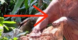 Раньше этого животного так боялись, что отрезали ему кончики пальцев. Через 20 лет всё изменилось...