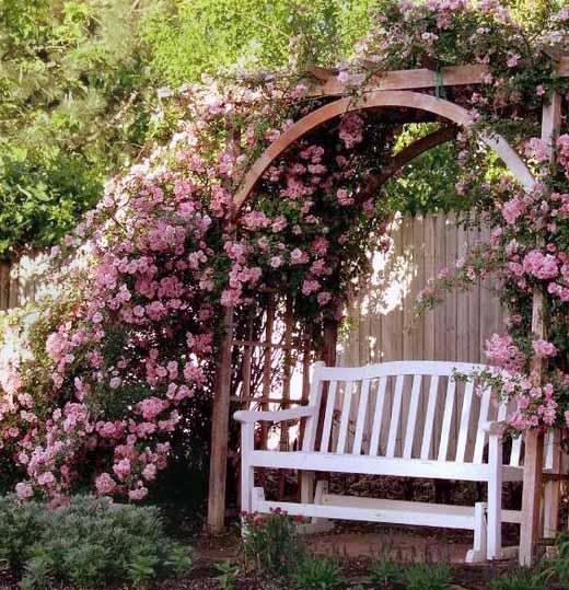 плетистая роза формируем арку