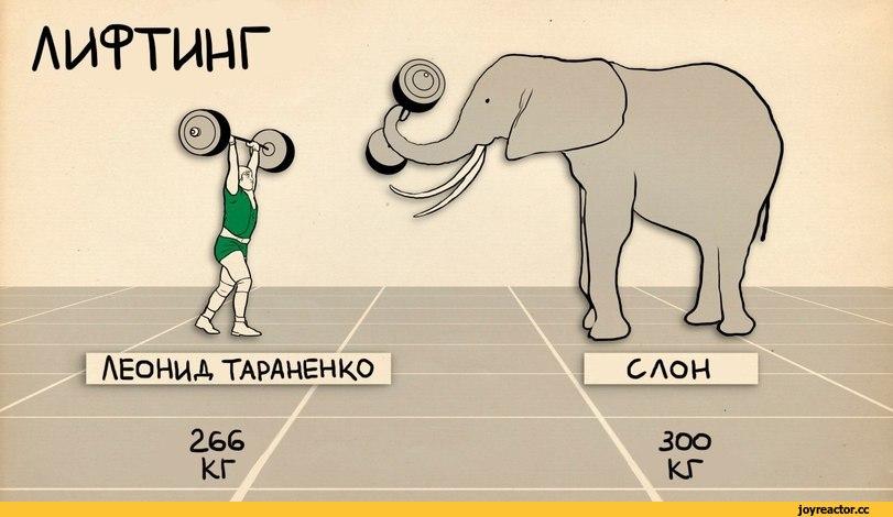 лиггинг ЛЕОНИД ТАРАНЕНКО 266 кг,спорт,достижения