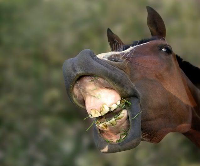 И Ксюша попала под лошадь...Этот Чёрный день календаря