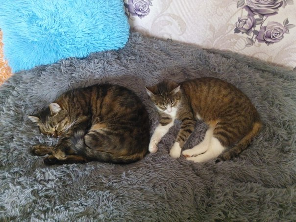 Это только двое из нашего кошачьего царства