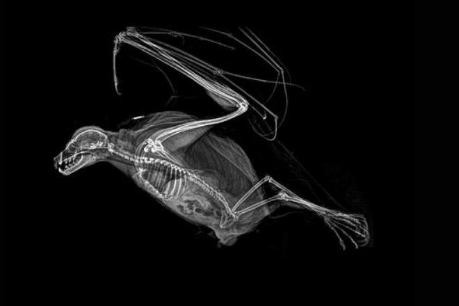 Уникальные рентген снимки животных