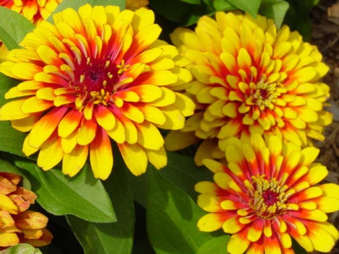 цвет, осени 25 (700x525, 426Kb)