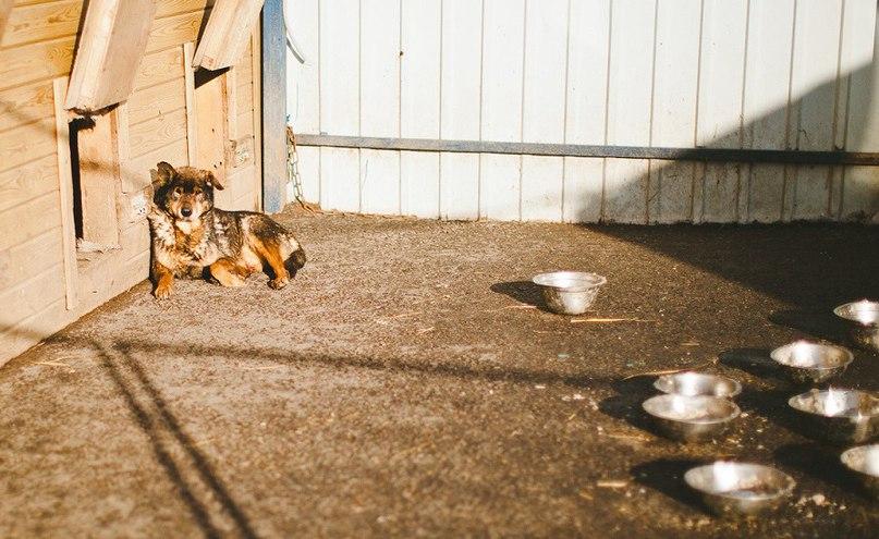 Собаки и нелюди. Что делать …