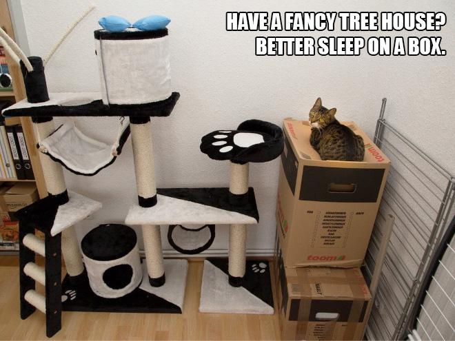 Никому не понять кошачью логику…