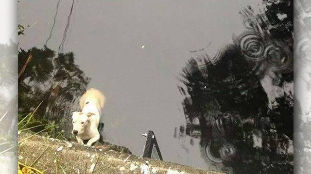 Всю ночь с реки доносились зовущие звуки… Утром там нашли собаку, но оказалось, звал на помощь совсем не пёс