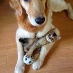 У собак и кошек есть усы. Какую функцию они выполняют у одних, а какую у других?