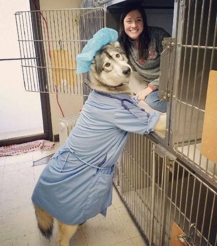 24 фото котанов, пёселей и ко, которые сотрут в порошок плохое настроение