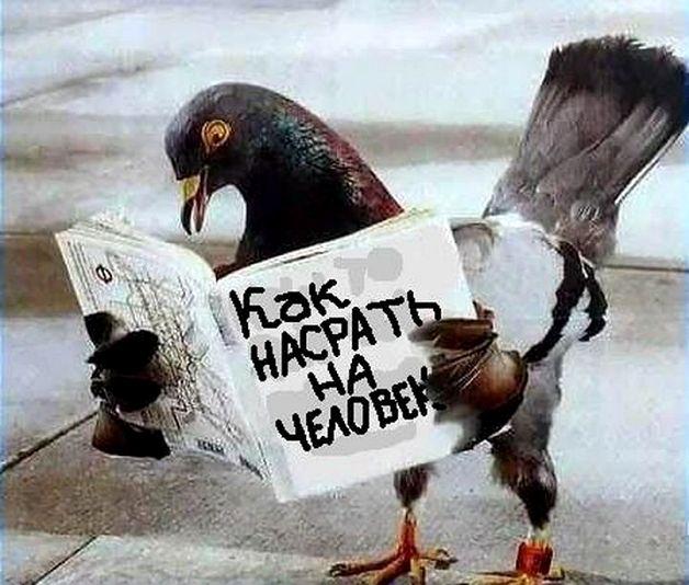 Способы отвадить голубей с балкона – методы действий для устранения визитов от этих птиц