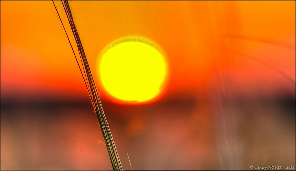 Фотопрогулки.  Закат в ковыле