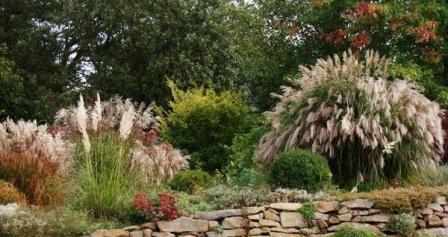 Прерийный сад: секреты создания.