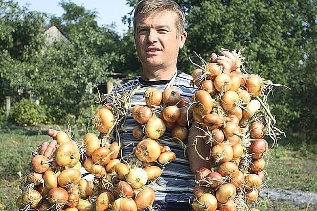 Большой урожай лука: 4 прост…
