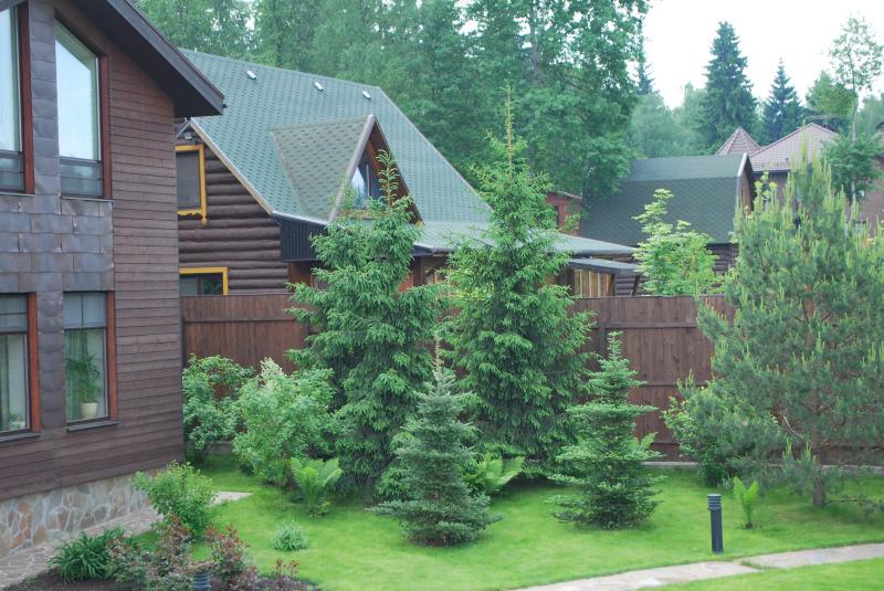 Почему хвойные деревья нельзя сажать возле дома…