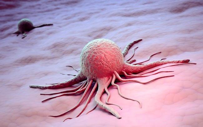 Рак вызывают грибы слизевики?