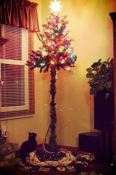 Вот такой должна быть елка, когда у вас есть котейка