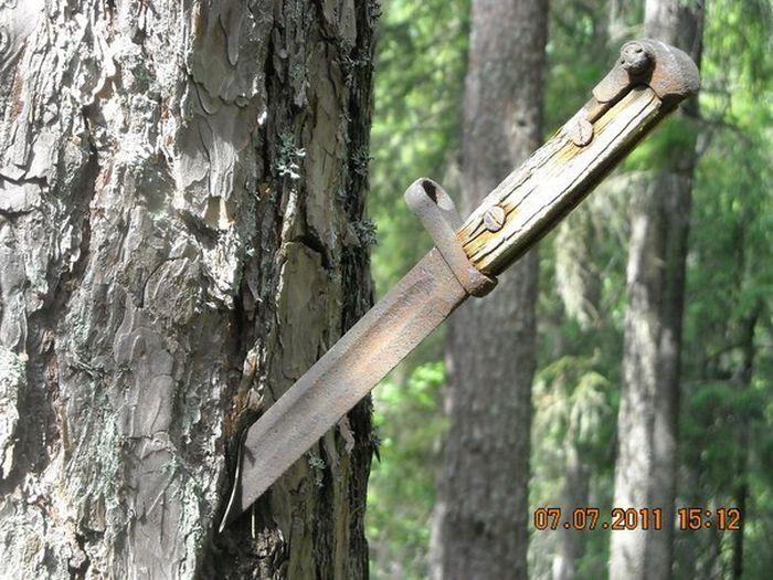 Вросшие в деревья предметы мест страшных былых боев война, деревья, оружие