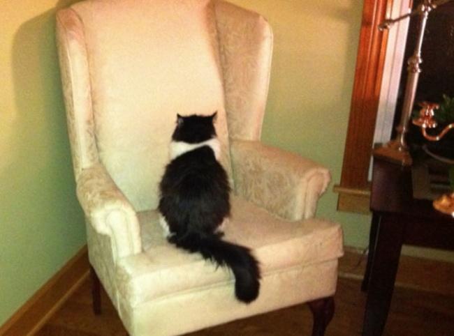20 открытий, которые вы сделаете, когда заведете кота
