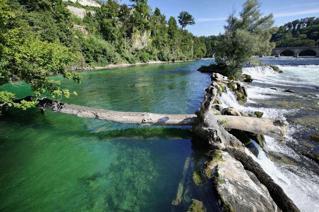 Тихая заводь с зеленой водой