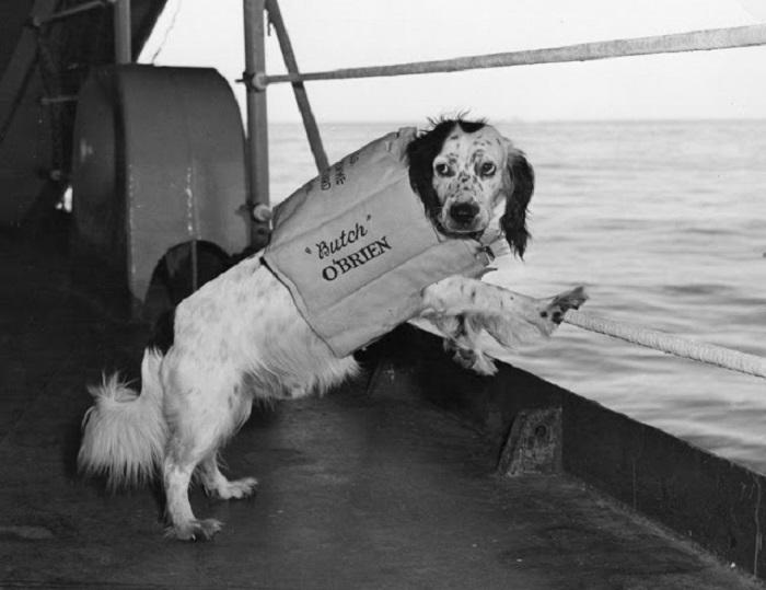 Пёс Бутч в спасательном жилете - талисман ВМС США, во время похода корабля в Японское море.