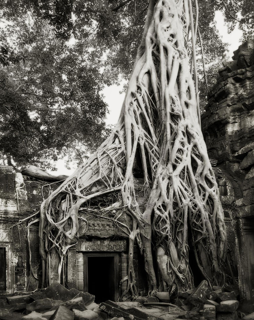 Деревья древние как мир в фотографиях из 14-летнего путешествия-13