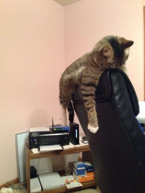 sleepingcats28 Коты, познавшие науку сна