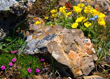 Как сделать альпийскую горку. Фотографии альпийских горок.