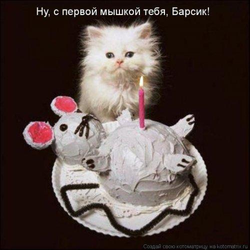 Лучшие котоматрицы недели (22 фото)