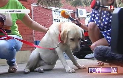 СКР передал незрячей певице украденную собаку-поводыря