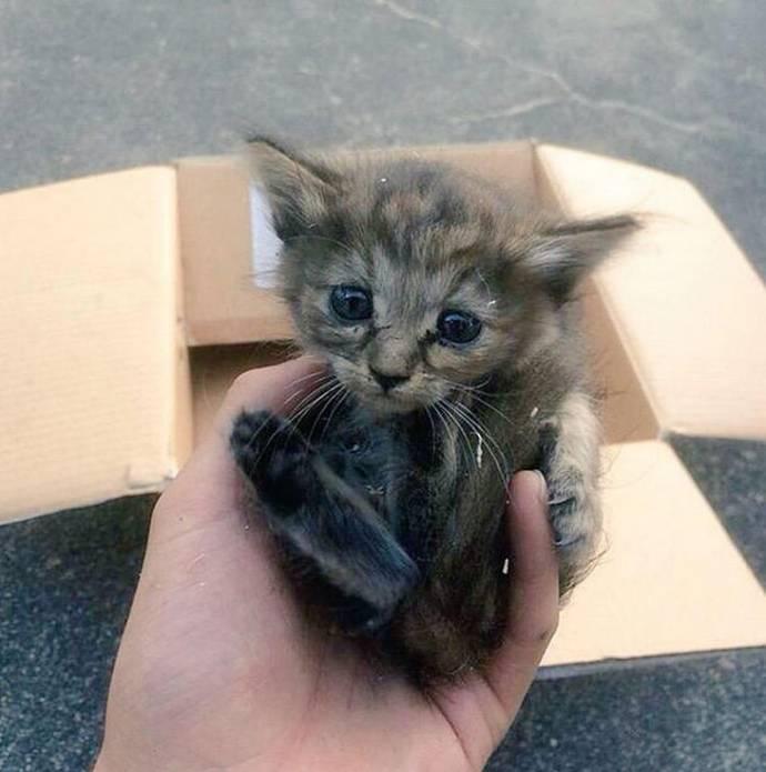 El gatito se crió entre los hurones