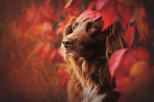 Портреты собак в работах фотографа Анны Гейер