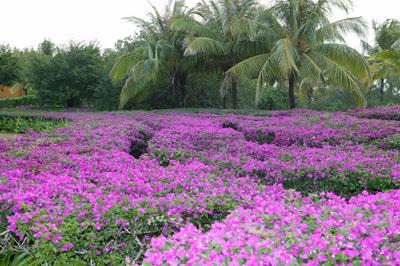 Остров Хайнань: райский уголок Китая