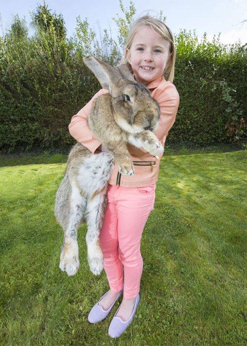 Крупнейший в мире кролик Дариус и его соперник, собственный сын Джефф